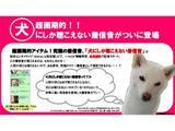 Японці створюють рингтони для собак